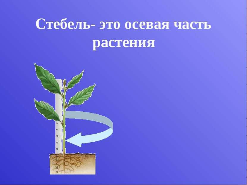 Укороченные стебли Подорожник Одуванчик