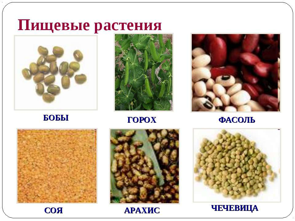 Пищевые растения БОБЫ ГОРОХ ФАСОЛЬ СОЯ АРАХИС ЧЕЧЕВИЦА
