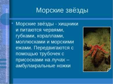 Морские звёзды Морские звёзды - хищники и питаются червями, губками, кораллам...