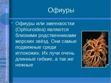 Офиуры Офиуры или змеехвостки (Ophiuroidea) являются близкими родственниками ...