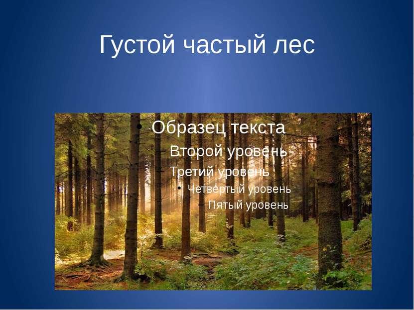 Густой частый лес