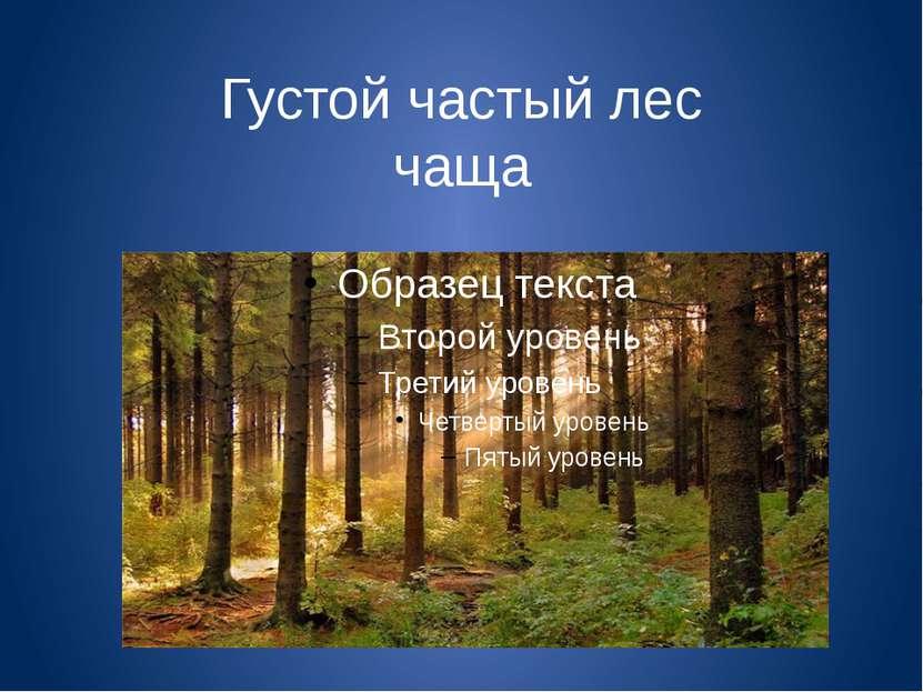 Густой частый лес чаща