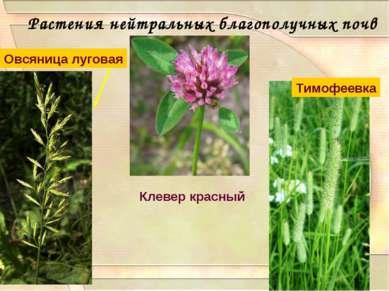 Растения нейтральных благополучных почв Клевер красный Тимофеевка Овсяница лу...