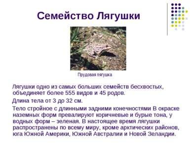 Семейство Лягушки Лягушки одно из самых больших семейств бесхвостых, объединя...