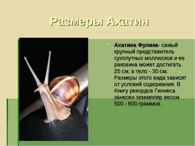 Размеры Ахатин Ахатина Фулика- самый крупный представитель сухопутных моллюск...
