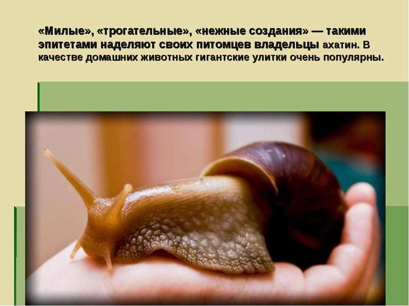«Милые», «трогательные», «нежные создания» — такими эпитетами наделяют своих ...