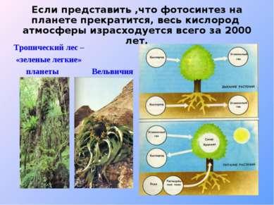 Если представить ,что фотосинтез на планете прекратится, весь кислород атмосф...