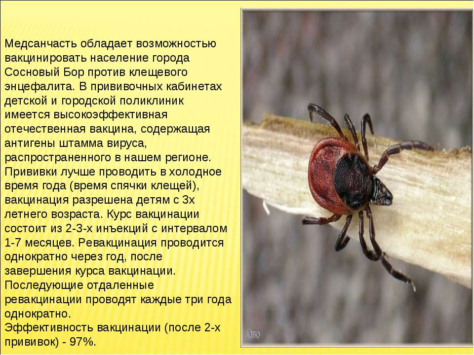 Медсанчасть обладает возможностью вакцинировать население города Сосновый Бор...