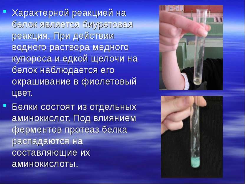 Характерной реакцией на белок является биуретовая реакция. При действии водно...