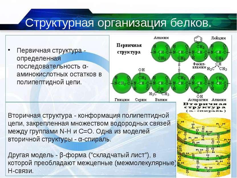 Структурная организация белков. Первичная структура - определенная последоват...