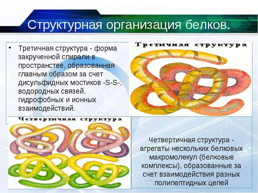 Структурная организация белков. Третичная структура - форма закрученной спира...