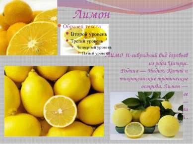 Лимон Лимо н-гибридный виддеревьев из родаЦитрус. Родина—Индия,Китай и т...