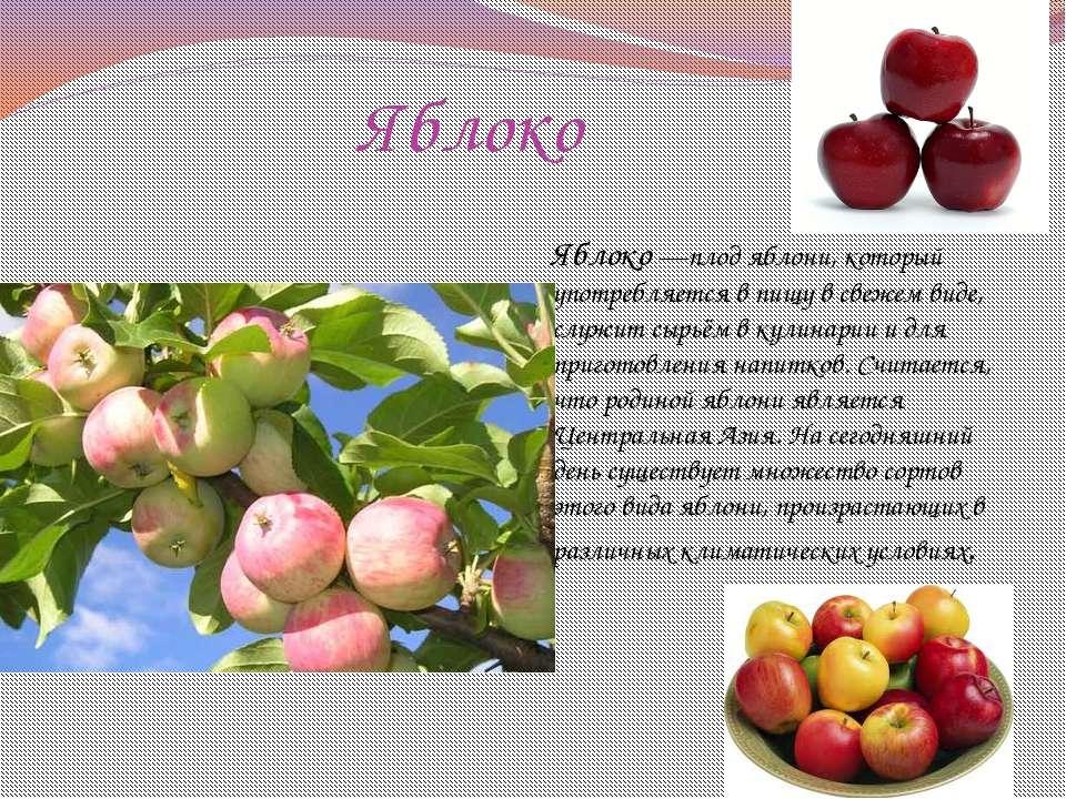 Яблоко Яблоко—плод яблони, который употребляется в пищу в свежем виде, служ...