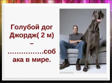 Голубой дог Джордж( 2 м) – …………….собака в мире.