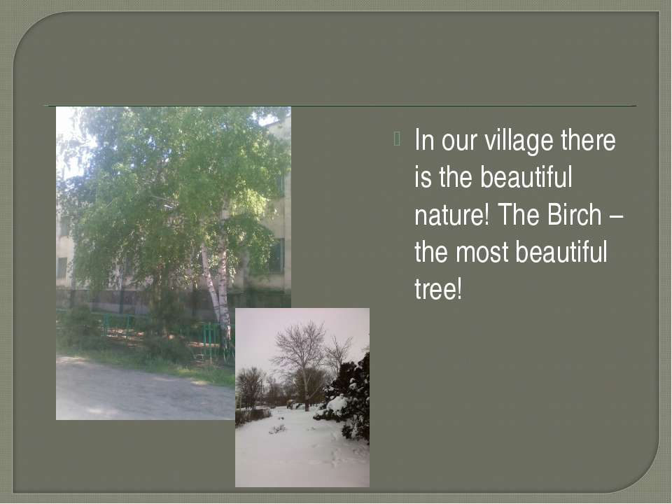 In our village there is the beautiful nature! The Birch – the most beautiful ...