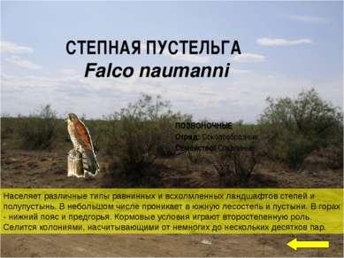 СТЕПНАЯ ПУСТЕЛЬГА Falco naumanni Населяет различные типы равнинных и всхолмле...
