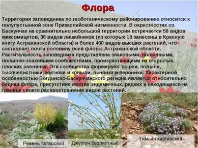 Флора Территория заповедника по геоботаническому районированию относится к по...