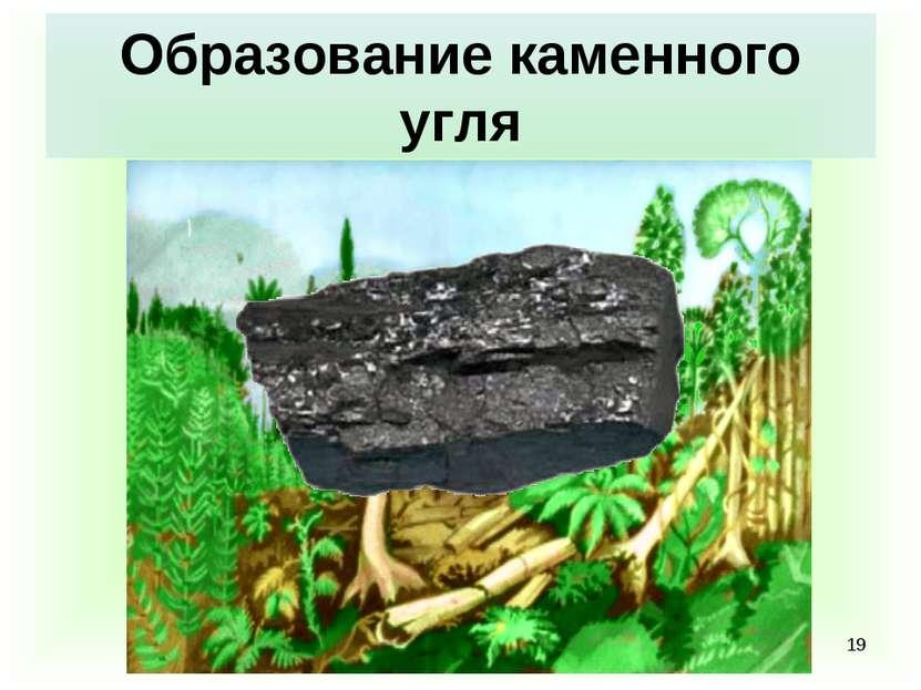 * Образование каменного угля
