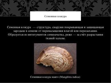 Семенная кожура — структура, снаружи покрывающая и защищающая зародыш в семен...