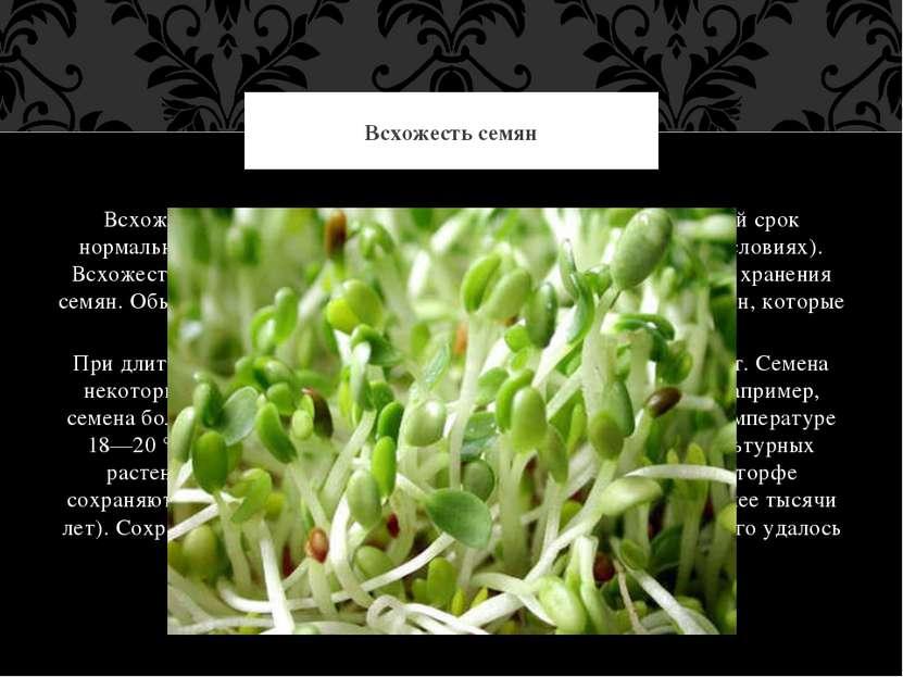 Всхожесть семян — это их способность давать за определённый срок нормальные п...