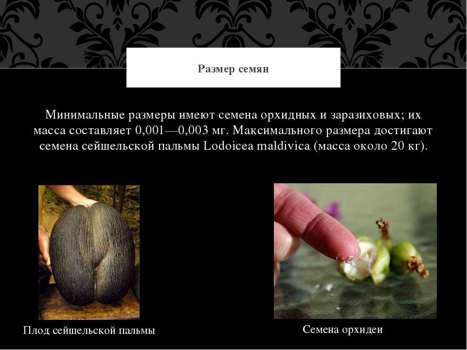 Минимальные размеры имеют семена орхидных и заразиховых; их масса составляет ...