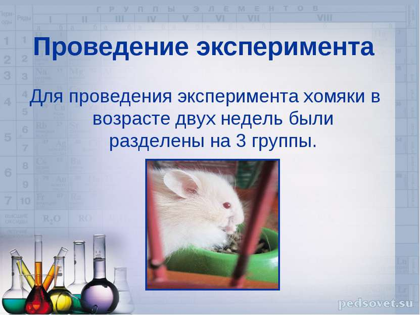 Проведение эксперимента Для проведения эксперимента хомяки в возрасте двух не...
