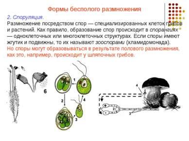 Формы бесполого размножения 2. Споруляция. Размножение посредством спор — спе...