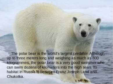 The polar bear is the world's largest predator. Although up to three meters l...