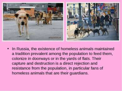 In Russia, the existence of homeless animals maintained a tradition prevalent...