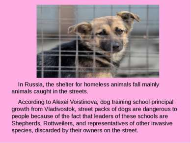 In Russia, the shelter for homeless animals fall mainly animals caught in the...