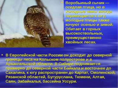 В Европейской части России он доходит до северной границы леса на Кольском по...