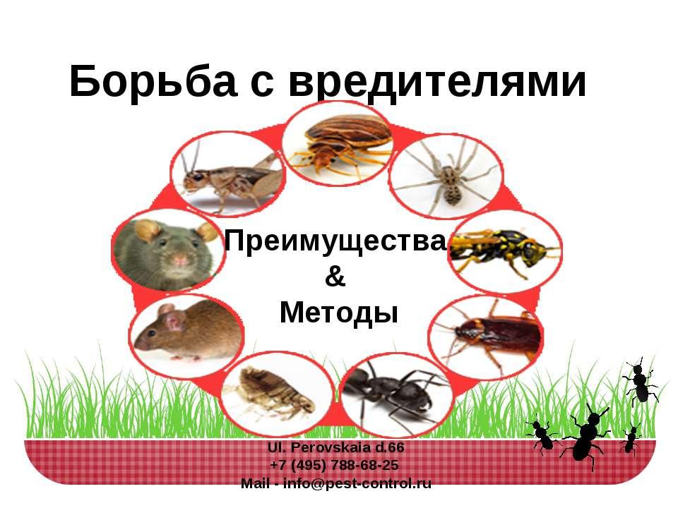 Борьба с вредителями Преимущества & Методы Ul.Perovskaia d.66 +7 (495) 788-6...