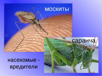 насекомые - вредители москиты саранча