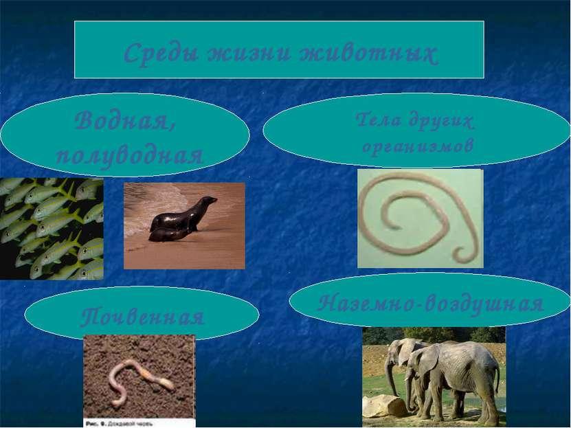 Среды жизни животных Водная, полуводная Почвенная Наземно-воздушная Тела друг...