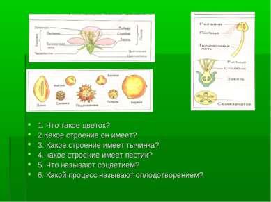 1. Что такое цветок? 2.Какое строение он имеет? 3. Какое строение имеет тычин...