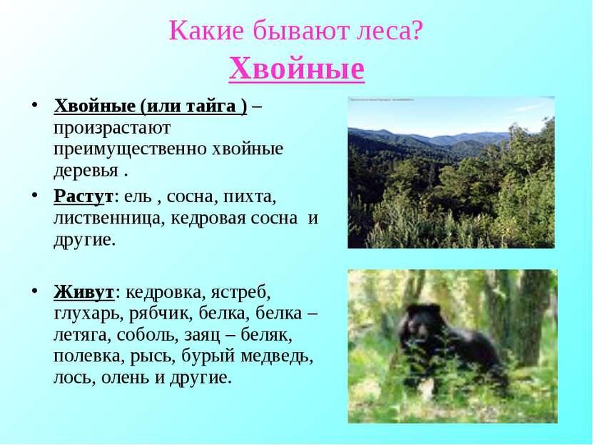 Какие бывают леса? Хвойные Хвойные (или тайга ) – произрастают преимущественн...