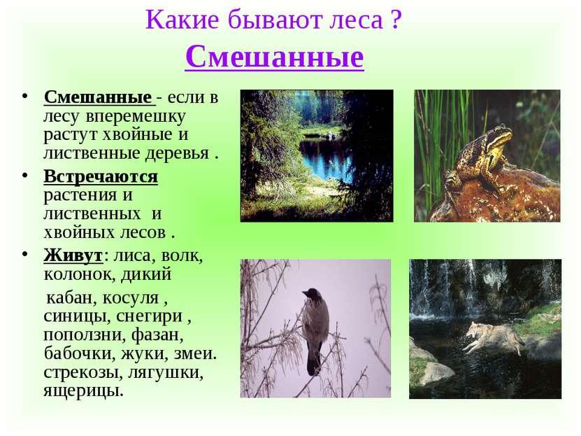 Какие бывают леса ? Смешанные Смешанные - если в лесу вперемешку растут хвойн...