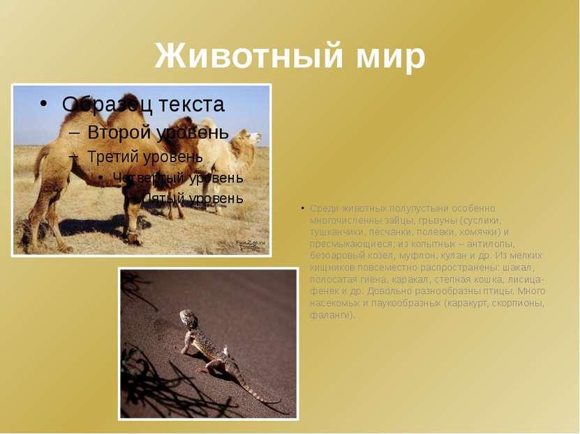 Животный мир Среди животных полупустыни особенно многочисленны зайцы, грызуны...