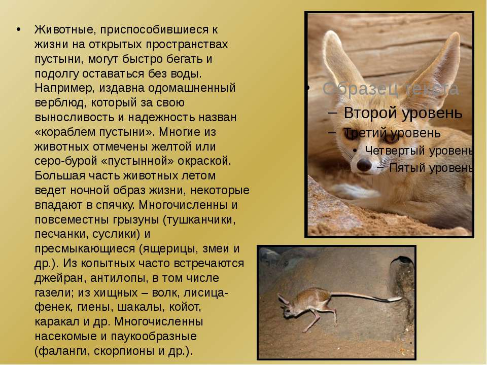 Животные, приспособившиеся к жизни на открытых пространствах пустыни, могут б...