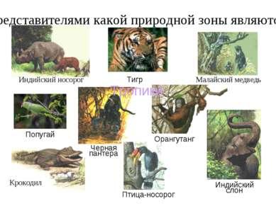 Представителями какой природной зоны являются: Малайский медведь Индийский но...