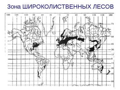 Зона ШИРОКОЛИСТВЕННЫХ ЛЕСОВ