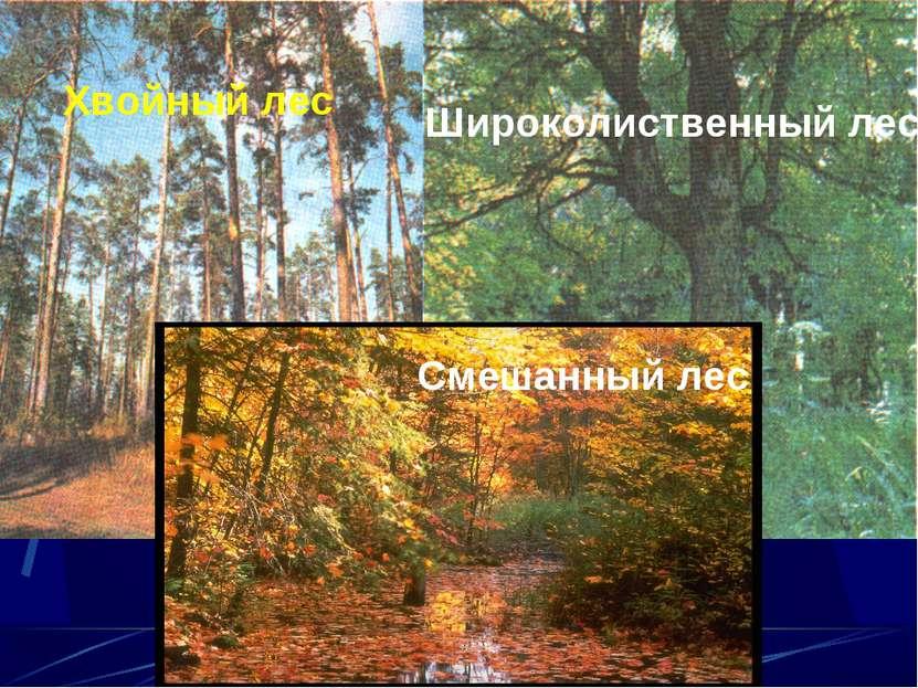Какие бывают леса? Хвойный лес Широколиственный лес Смешанный лес