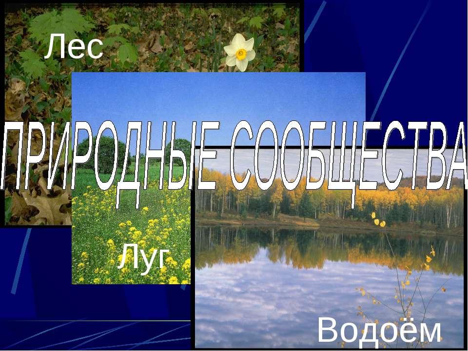 Лес Луг Водоём