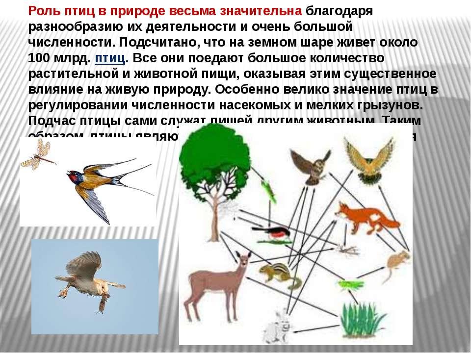 Роль птиц в природе весьма значительна благодаря разнообразию их деятельности...