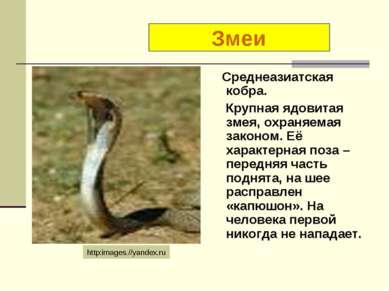 Среднеазиатская кобра. Крупная ядовитая змея, охраняемая законом. Её характер...