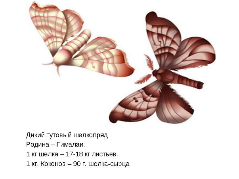 Дикий тутовый шелкопряд Родина – Гималаи. 1 кг шелка – 17-18 кг листьев. 1 кг...