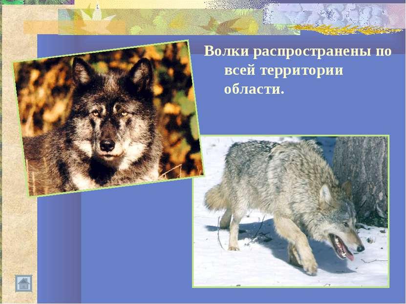 Волки распространены по всей территории области.