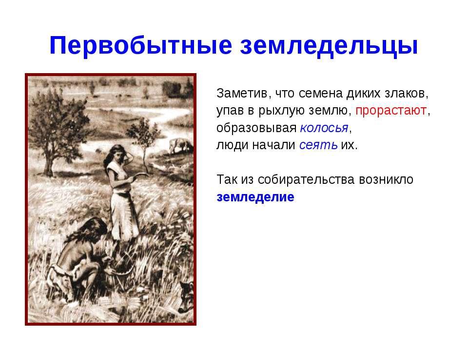 Первобытные земледельцы Заметив, что семена диких злаков, упав в рыхлую землю...