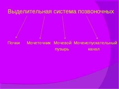 Выделительная система позвоночных Почки Мочеточник Мочевой Мочеиспускательный...
