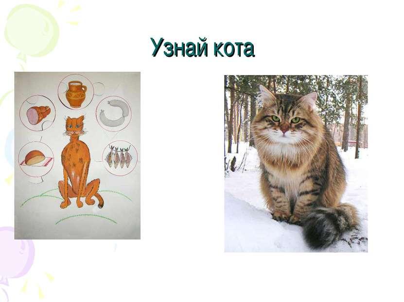 Узнай кота